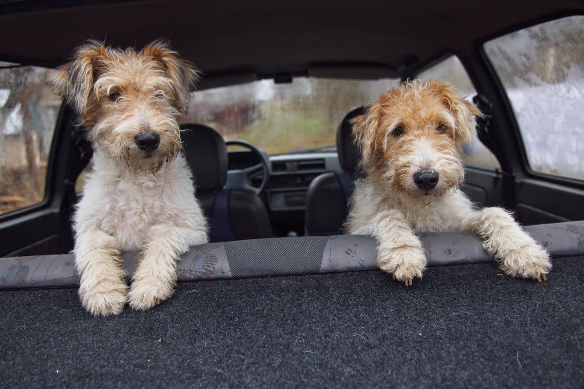 Things to Remember When Taking Your Pet on Road Trips Instant Windscreens
